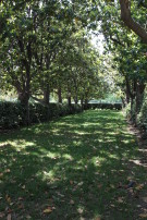 Allée of Magnolias Leading From Terrace to Meadow at Crespi Hicks Estate