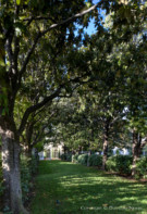 Line of Trees on Dallas Estate Property