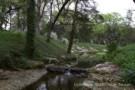 Creek Running Through Wilderness on Preston Hollow Estate Home