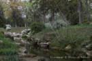 Stream Running Through Wilderness on Mayflower Estates Property
