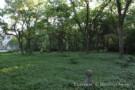 Lush Landscape Surrounding Dallas Estate Home